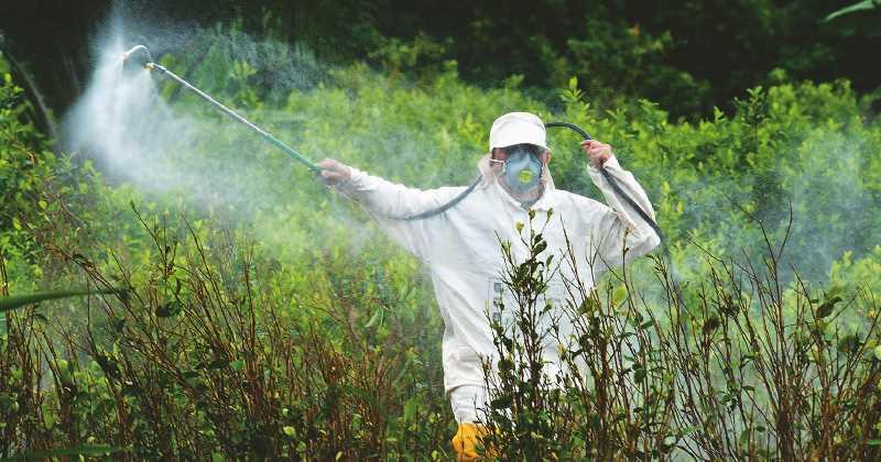 No más fumigaciones con glifosato en cultivos ilícitos