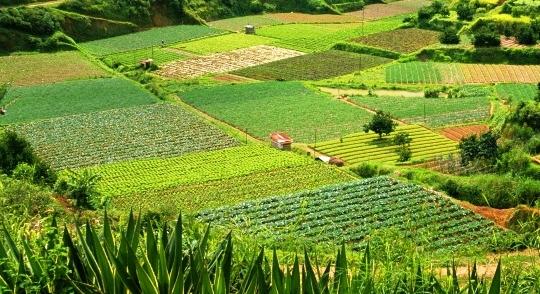 Presupuesto para el agro en tiempos de crisis
