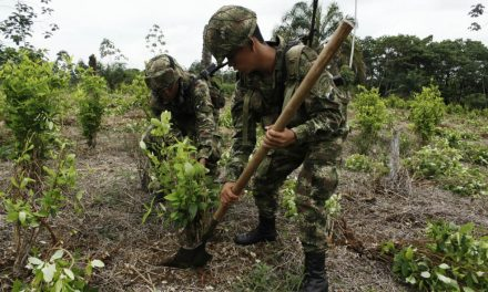 Ejército realiza operaciones de erradicación forzada en Putumayo profundizando crisis por Covid 19