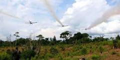 Vuelven las fumigaciones al Cauca