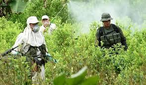 Comunidades del Tambo buscan cambio en la estrategia de erradicación
