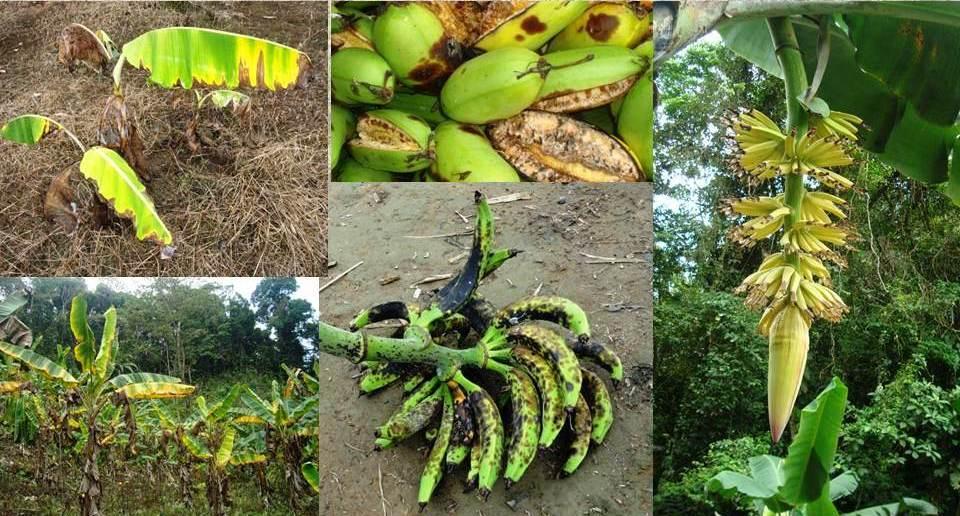 Resistencia del pueblo chocoano