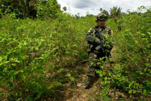 Comunicado urgente: Esmad agrede a comunidades movilizadas pacíficamente contra erradicación forzada