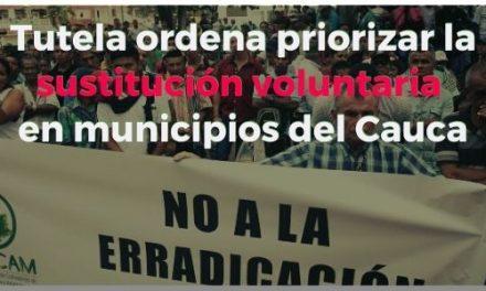 Tutela ordena priorizar la sustitución voluntaria en municipios del Cauca